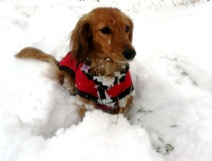 dog-coat-Jerry