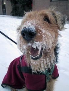 dog-coat-lulu